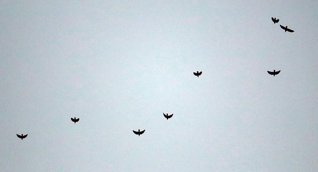 Crow sky - II