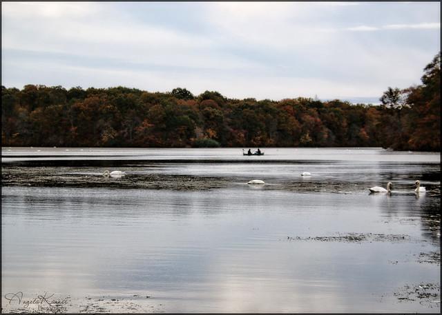 Going Fishing In Swan Lake...