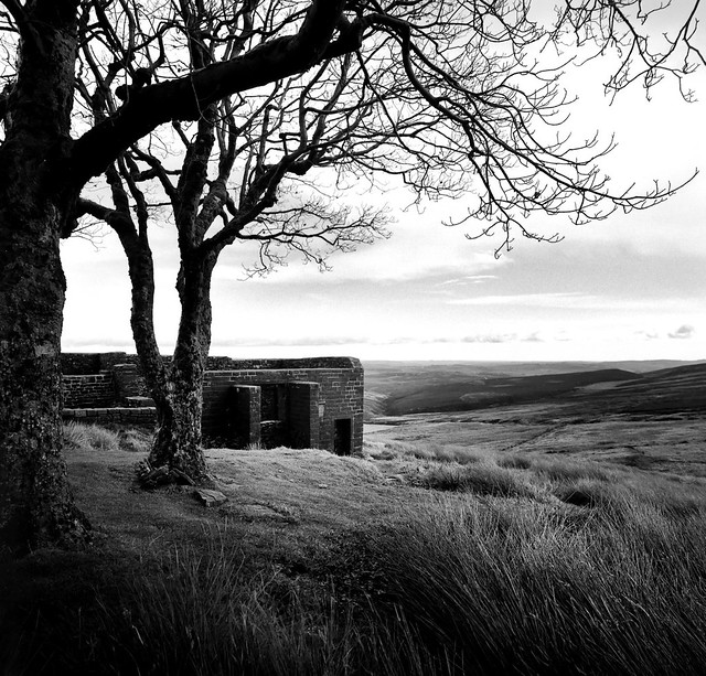 Upon the Blasted Moor