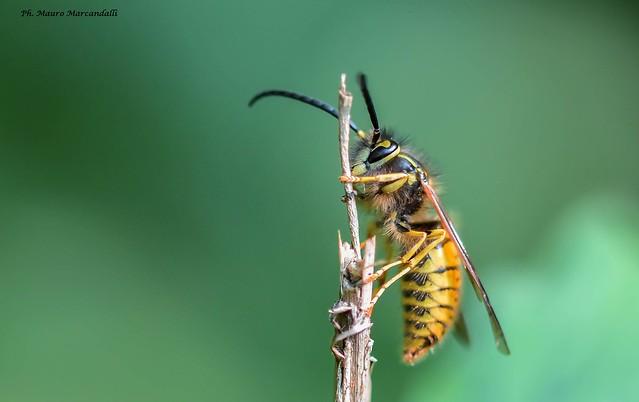 Una vespa ancora vispa