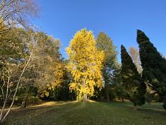 Herbst im Schlosspark Sonnewalde in der Niederlausitz