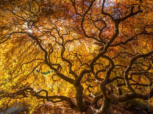 Kubota Gardens That Tree Gfx50s GF23mm