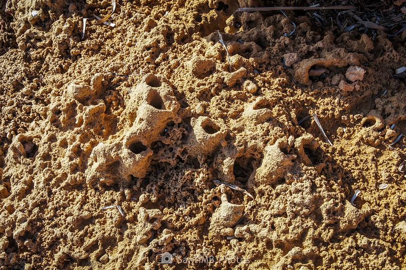 Tubos fosilizados de poliquetos en las rocas de l'Adolç del Me