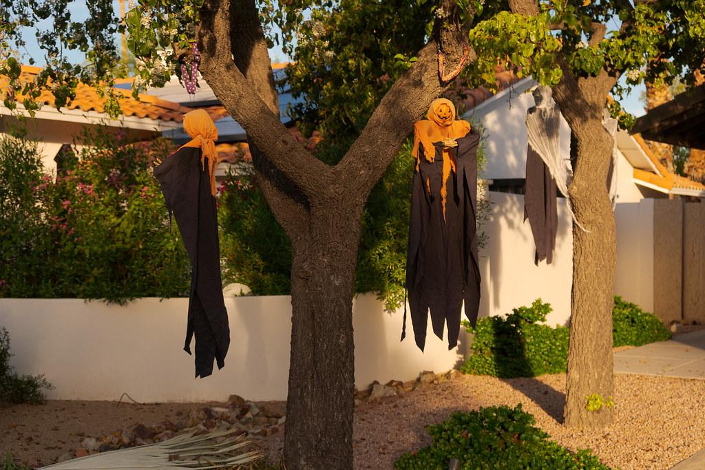 Pumpkin skeleton Halloweeen decorations hang from a tree in the Buenavente neighborhood of Scottsdale, Arizona on October 28, 2018. Original: _DSC9074.arw