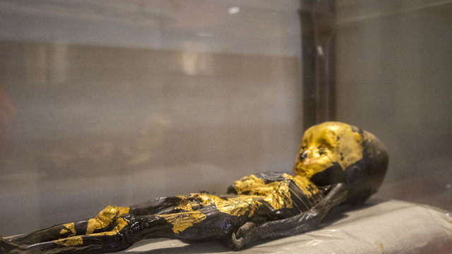 The golden child mummy at the Egyptian Museum of Cairo