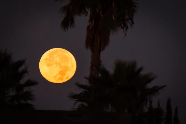 D32933E8 - Full Moon Set Halloween Morning