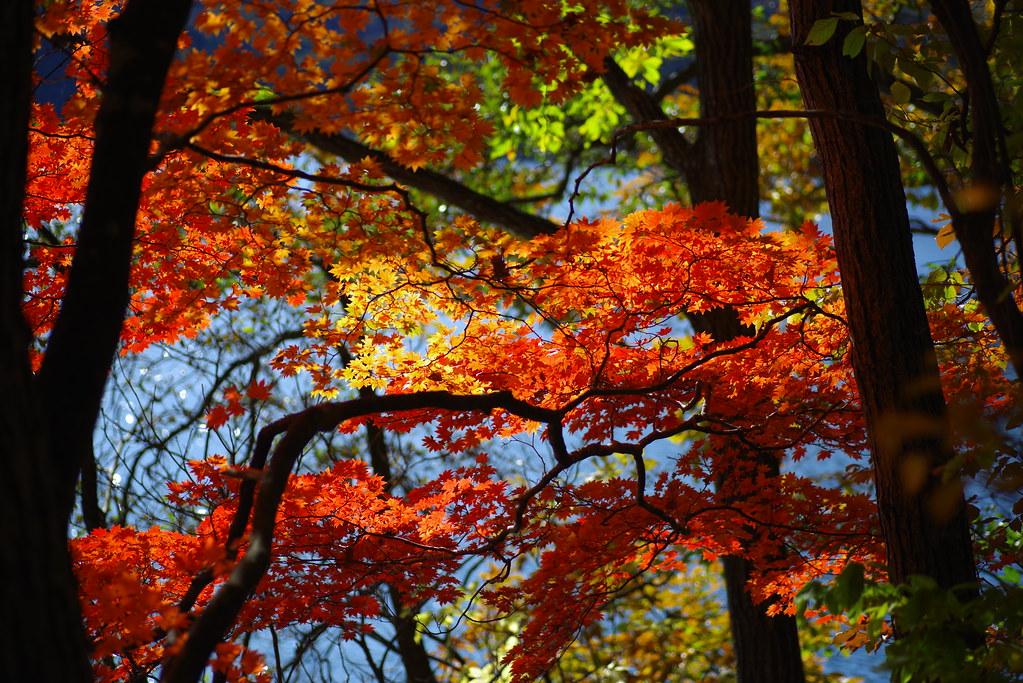 紅葉:青木湖