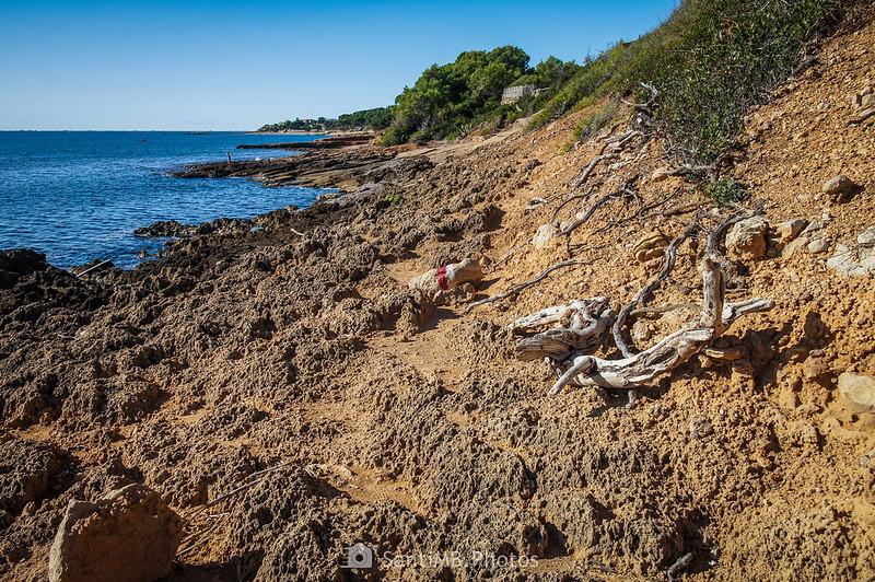 Troncos y raíces en la orilla cerca de la Pedrera del Molar
