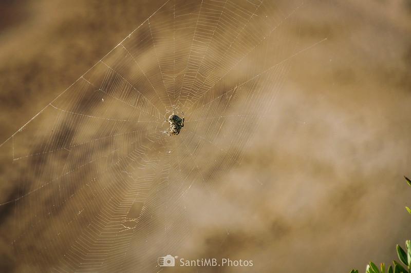 Araña y telaraña en el Camino de Ronda en Perelló-Mar