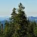 "<p><a href=""https://www.flickr.com/people/kodak260/"">Kodak Photographer</a> posted a photo:</p>  <p><a href=""https://www.flickr.com/photos/kodak260/50552402142/"" title=""190906 - Oregon - Mount Shasta Roadtrip - 04 Mount Shasta - Everitt Memorial Highway 1045""><img src=""https://live.staticflickr.com/65535/50552402142_e3c0ba0cd2_m.jpg"" width=""240"" height=""160"" alt=""190906 - Oregon - Mount Shasta Roadtrip - 04 Mount Shasta - Everitt Memorial Highway 1045"" /></a></p>  <p>Everitt Memorial Highway<br /> <br /> <a href=""https://youpic.com/Kodak260"" rel=""noreferrer nofollow"">youpic.com/Kodak260</a><br /> <a href=""http://kodak260.nl/"" rel=""noreferrer nofollow"">kodak260.nl/</a></p>"