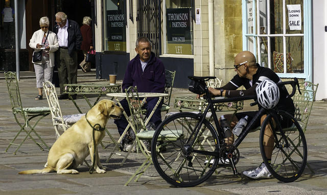 Dog Paying Great Attention when Dog Walker Meets Cyclist at Cafe in Cirencester - Cotswolds 8