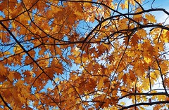 under-the-old-oak-tree