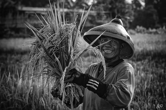 His fortune : Rice and smile !