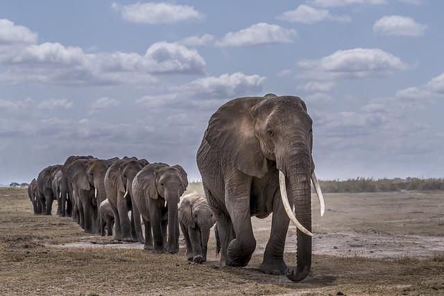 troupeau éléphants 10-7512