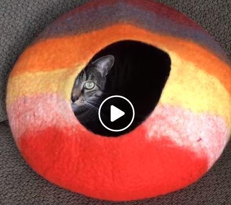 cama de gato arrancada