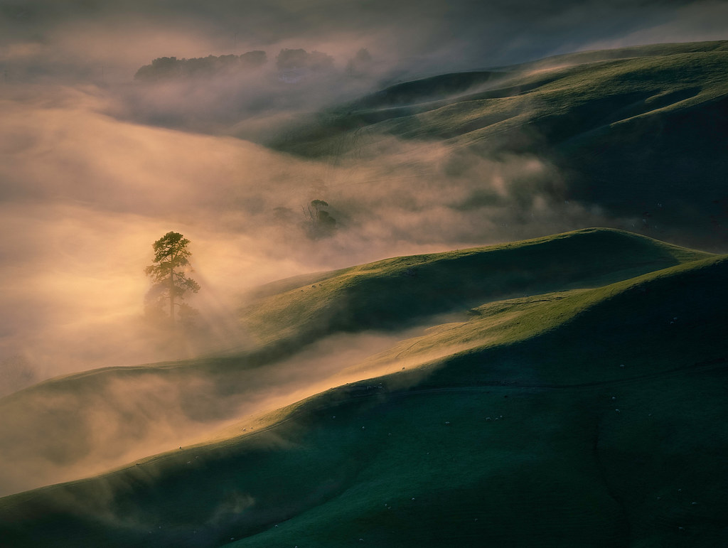 Tree and Morning Mist