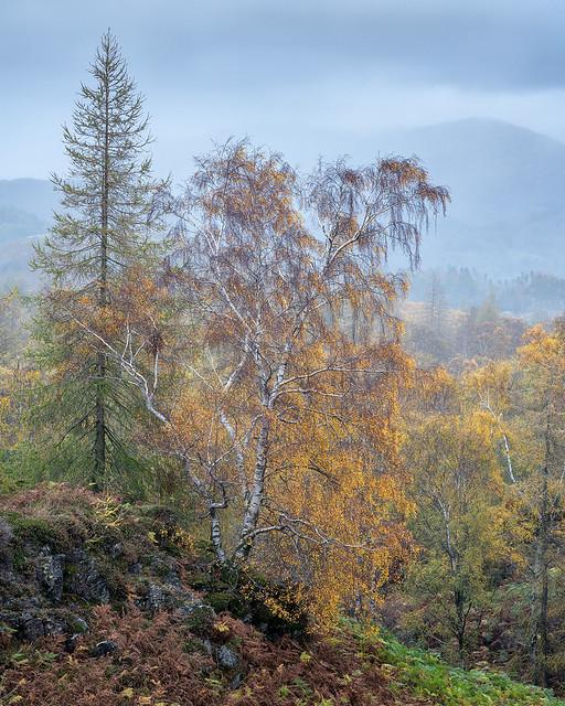 Holme Fell Autumn Colours