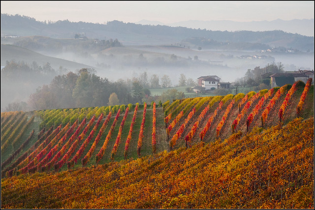 autumn in the Langhe
