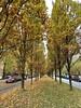 Autumn in Evere