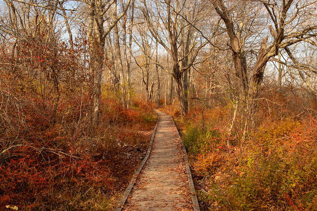 Maine autumn path