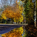 Autumn Puddle Reflexion