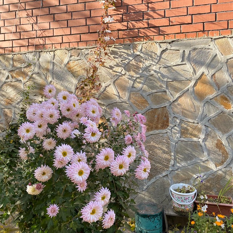 Огород в октябре