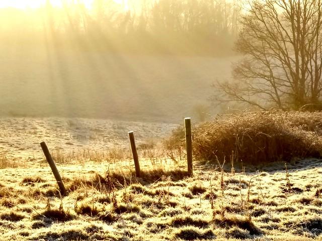 Early morning sun beams