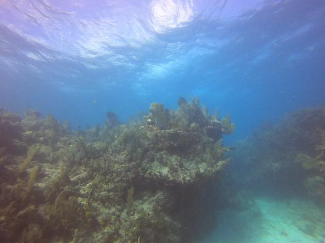 November Dive Photos 15 AM 2020