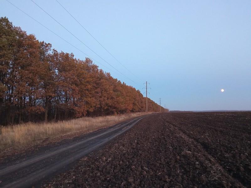 Дубовая лесополоса осенью