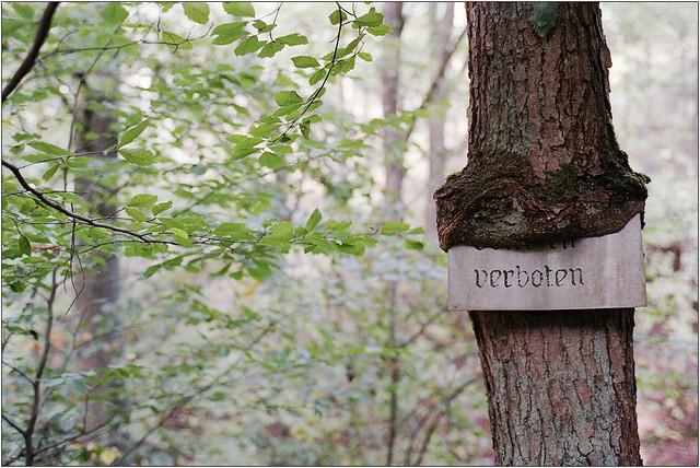 Herbstwald V