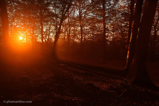 sunset in beech forest