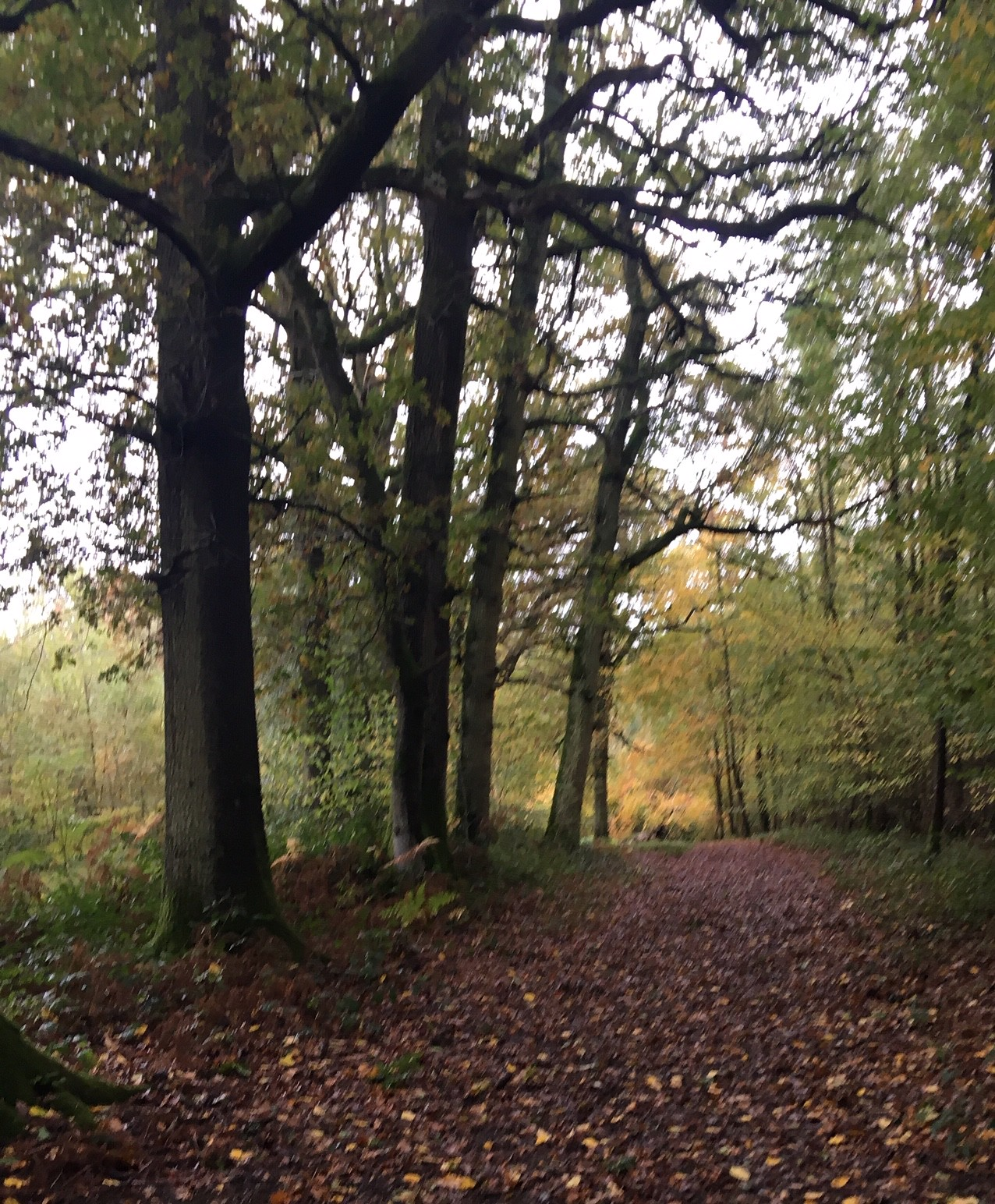 Autumn Ockley to Warnham