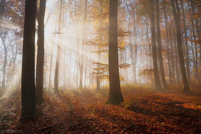 Light beams - Aargau