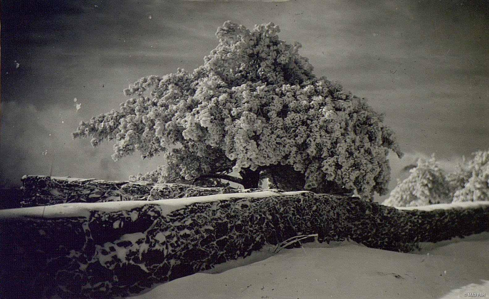 Деревня Гулин зимой