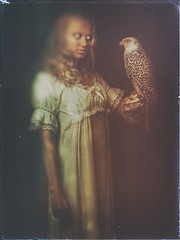 The feathered inheritance