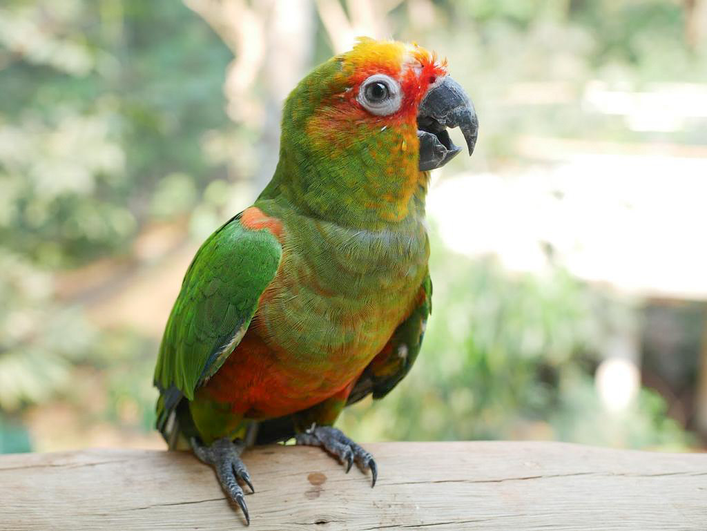 Friendly parrot in Iguaçu
