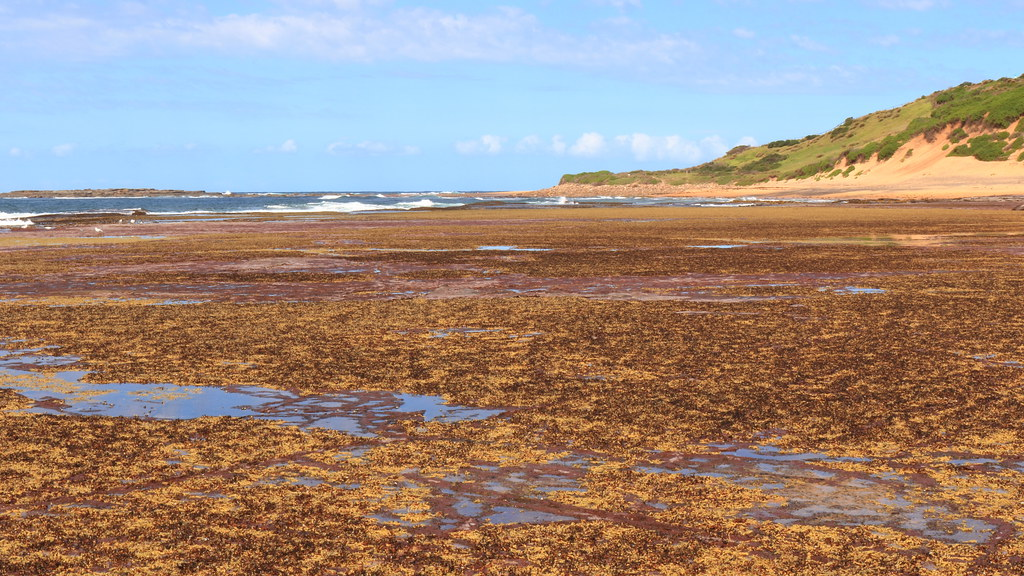 Low tide. Collaroy, NSW.