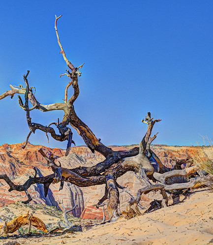 tree snowcanyon statepark utah redrocks cliffs sandstone desert wilderness nature landscape hdr sky nikon d750