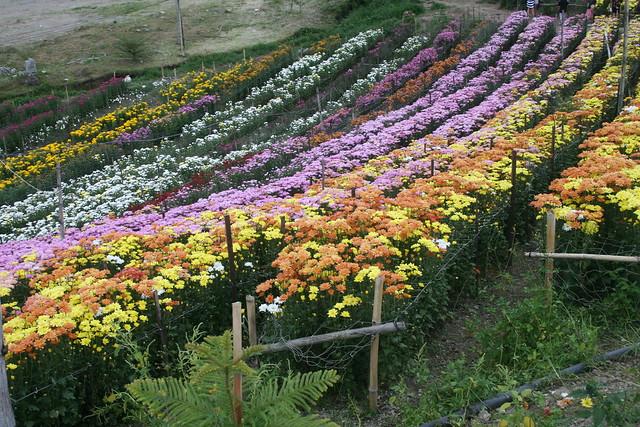 Eden's Flowers Farm, Tupi, Mindanao, Philippines
