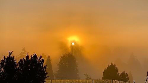 fog foggy britishcolumbia delta sunrise