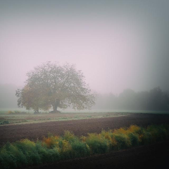 L'arbre dans le brouillard