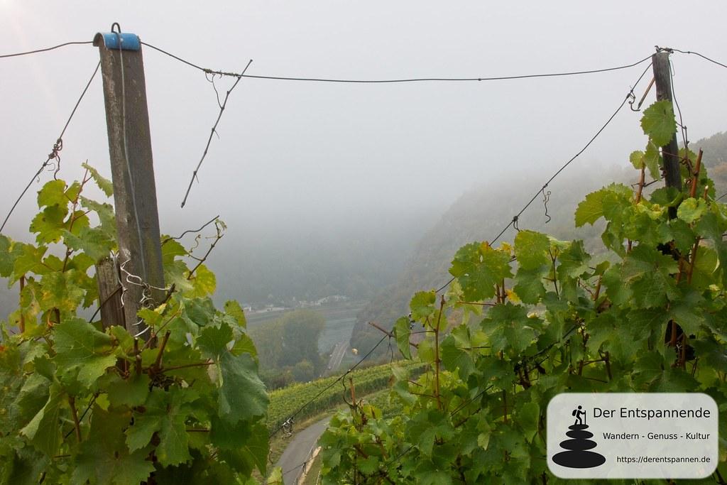 Steillagen am Rheinsteig