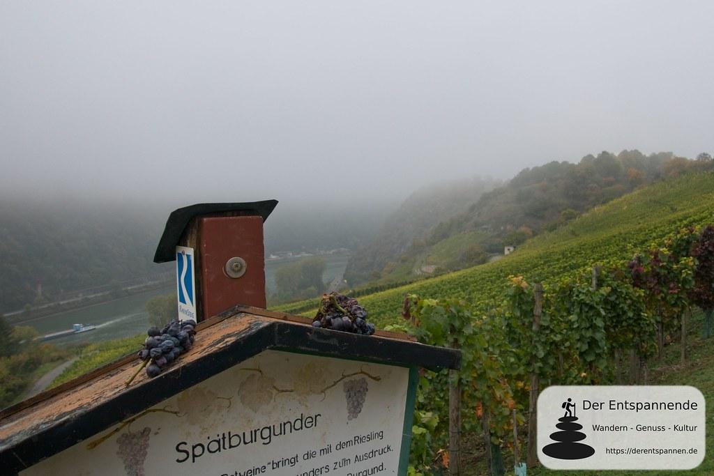 Spätburgunder und Steillagen am Rheinsteig