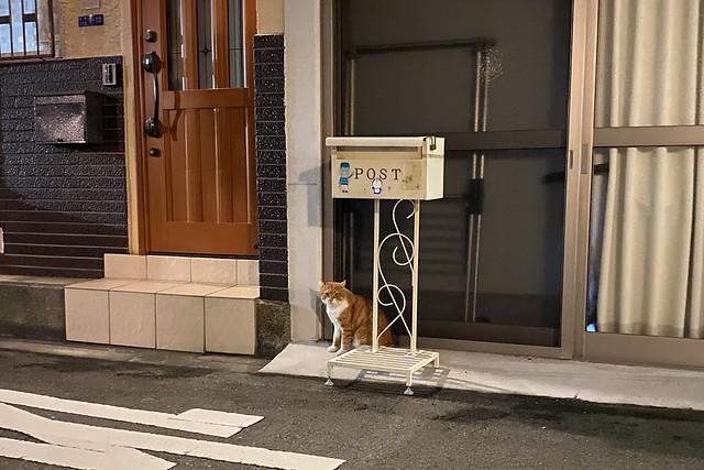 Today's Cat@2020−11−02