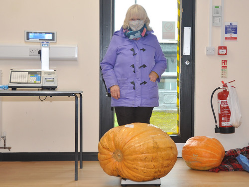 Pumpkin Competition 2020
