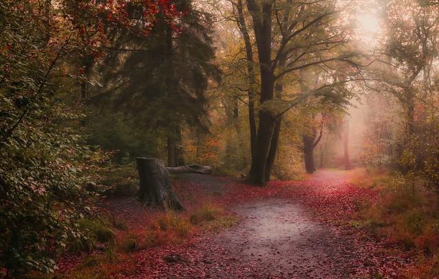 November rain forest