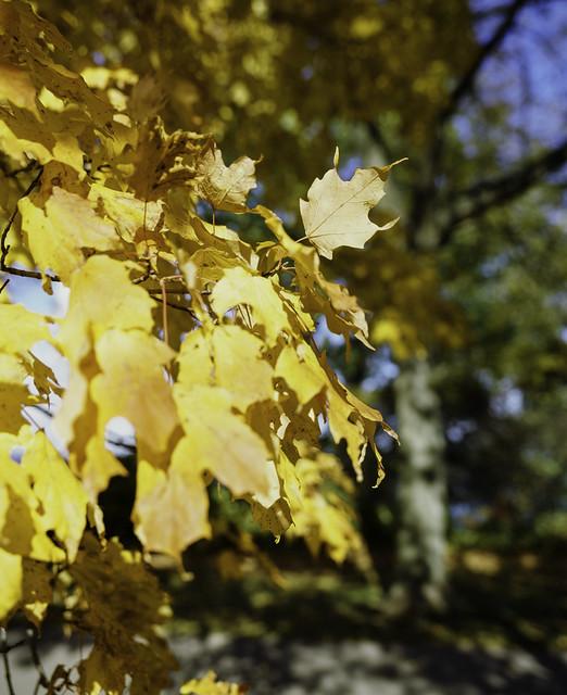 Waving leaf