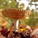 Macro Mushrooms_00098