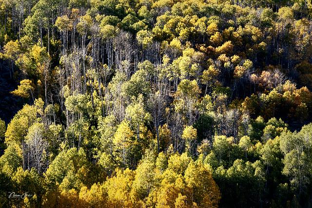 Hillside Autumn Color