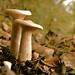 Macro Mushrooms_00101